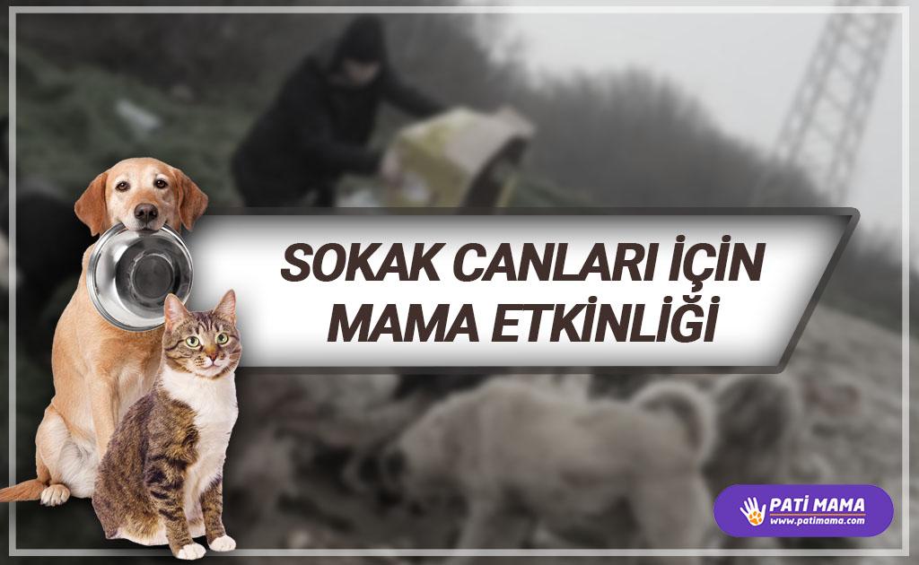 İnsanların zulmünden kurtarıp bahçemize aldığımız 28 kedi için mama etkinliği